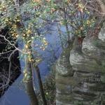 Edinburgh Reflections